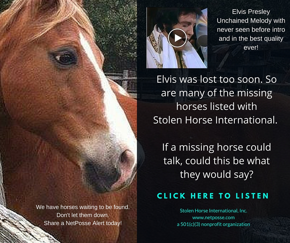 ElvisMissingHorses.jpg