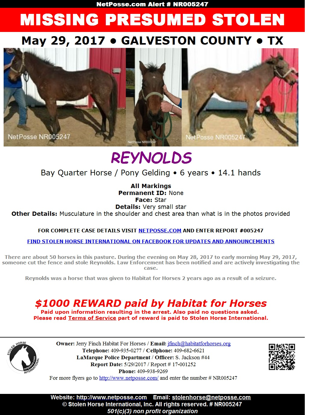 Horse Stolen from Texas Equine Rescue