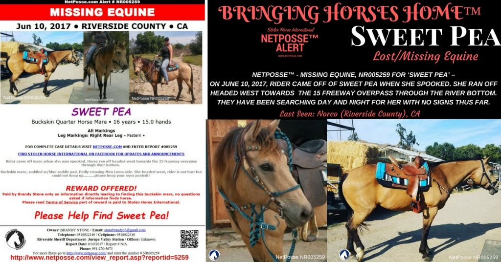 PRESS RELEASE - Missing/Lost Equine - Sweet Pea - Norco