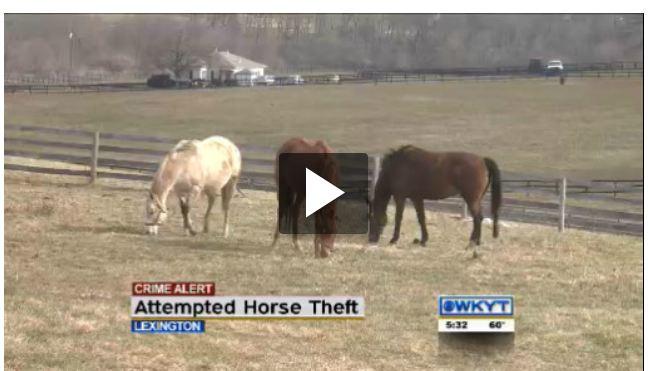 Horse stolen from Lexington, KY farm