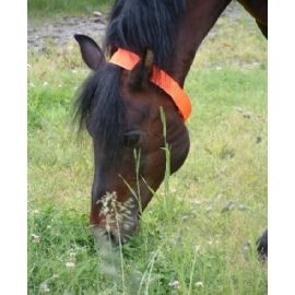 The Original Equine Protectavest blaze orange horse collar for hunting season safety