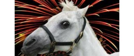 12 tips for safe horses during 4th of July fireworks