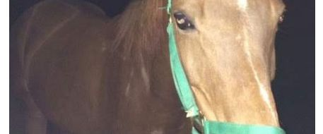 Lansing State Journal reports: Lost horse found wandering in Meridian Township