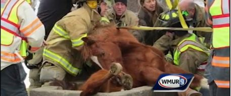 Rescuers work to free horse trapped in concrete trough