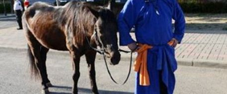 Hungover Chinese man forced to return stolen horse