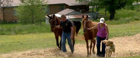 Horses Stolen, Found In Northern Davidson County Tennessee