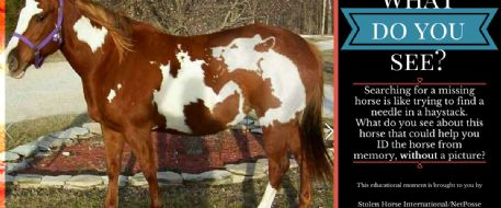 Stolen Horse International Educational Moment: Can you ID this horse without a picture?