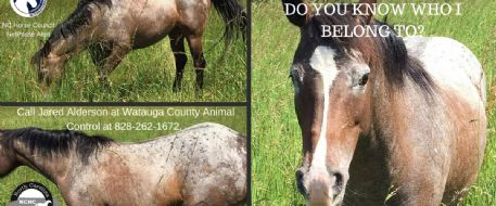 Horse found roaming  in Boone Mt, NC - Do you know the owner?