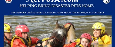 Are You Looking for Lost or Missing Horses/Pets Due to Louisiana Flooding?