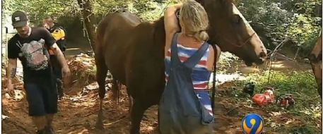 Firefighters, deputies rescue horse stuck in South Fork River