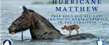 Stolen Horse International Gives Free Services to Hurricane Matthew Lost and Found Animals
