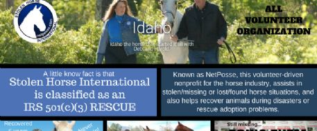 6 Myths About Our Stolen Horse International Rescue