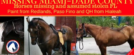 Fence cut and 2 horses stolen from Hialeah ranch in Florida, 1 more missing from Redlands