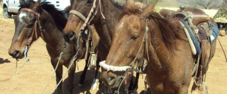Three horses loaded with dope seized by border authorities in Arizona