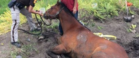 Owner of a Montana horse stuck and rescued from mud by police found