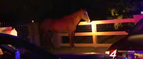 Albuquerque Horse Reunited With Owner