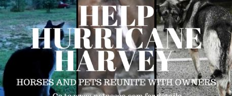 Stolen Horse International is Here to Help Hurricane Harvey Animals Go Home