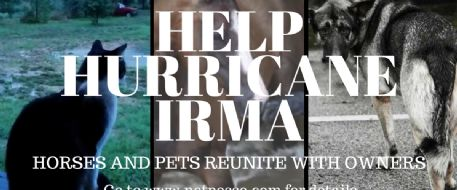 Hurricane Irma Missing/Lost Pets/Horses - How to File a Report