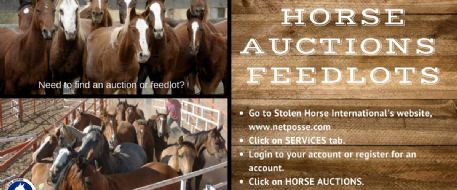 Stolen Horse International Horse Auction Networking Resource - Sales, Feedlots, Kill Pens, Traders