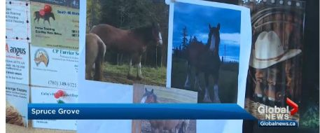 Outpouring of support after Entwistle-area horse disappears - Where is Molly?