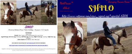 Press Release - Missing Equine - Shilo- Wisonsin