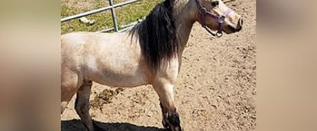 Valley News says Perris deputies recover stolen miniature pony