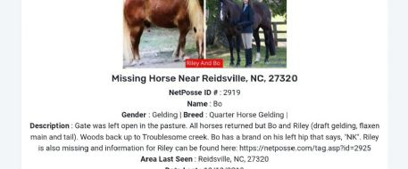 $3,000 REWARD For Two Horses Missing from Reidsville, NC