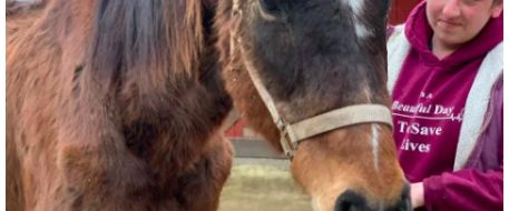 Two emaciated horses dropped off at Lancaster County Stable