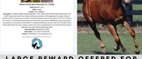 Large Reward Offered For Leads After Horses Butchered in Florida