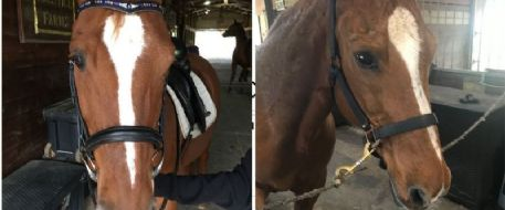 Owners searching for stolen horse in Houston offer $2,500 reward
