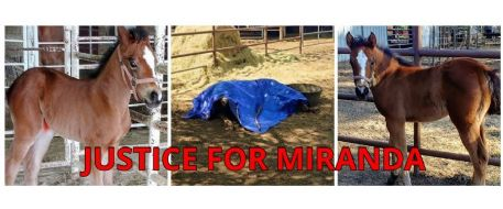 Someone Shot this Precious Filly! RIP Miranda!