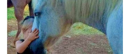 HORSE ATTACK - Horse shot and left to die after attempted horse theft