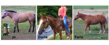 Three Horse Stolen by Alledged Repeat Horse Theft Offender in Texas