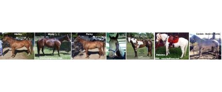 Stolen Horse International Commentary on Florida Horse Theft, Slaughter and Dismemberment