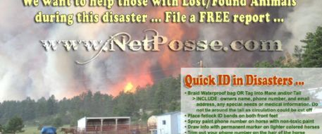 Quick disaster tips from NetPosse.com
