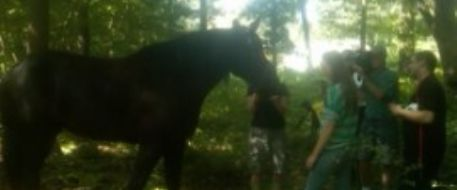 Joliette the Horse Found After Being Lost in the Woods for Two Days