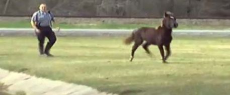 Runaway horse bolts through apartment complex in Beaumont, Texas