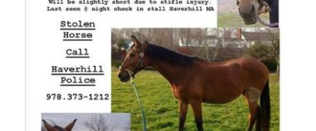 Haverhill police searching for horse thieves