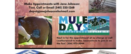 Get Your Horse Freeze Branded in May 2020 in NC