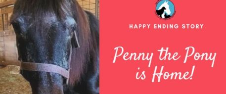 PENNY THE PONY IS HOME SAFE!