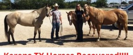 Stolen Horses Recovered Before Going To Mexico