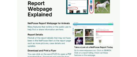 NetPosse Reports Listing, Webpage and Flyer