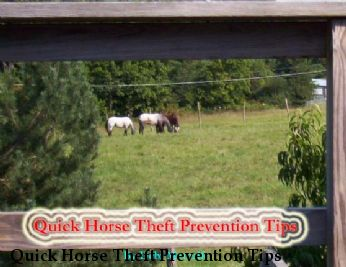 Quick Horse Theft Prevention Tips
