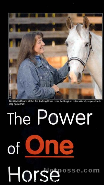 The Power of One Horse (Gaited Horse Magazine Article)