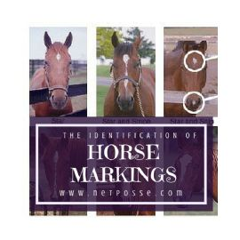 Identification of Horse Markings