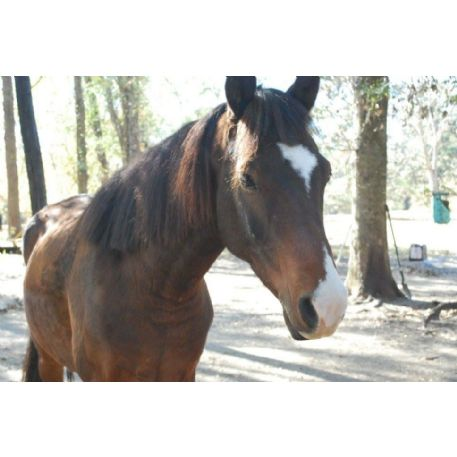 MISSING Horse - Ranger