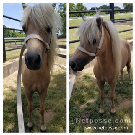RECOVERED Horse - Found Mini - Stud Muffin