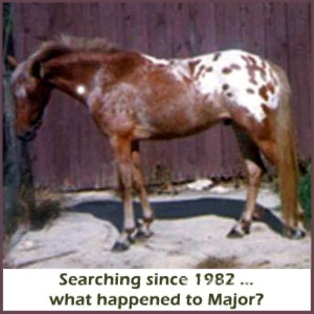 MISSING Horse - Major's Pride
