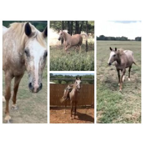 MISSING Horse - Lindie