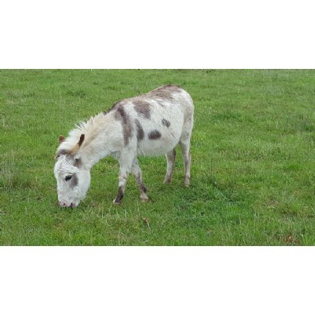 SEARCHING FOR Donkey - Arizona - REWARD